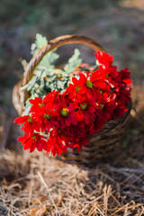 Basket with red flowers in sunlight on the ground.