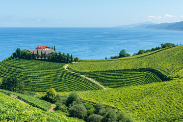 Txakoli vineyards with Cantabrian sea in the background, Getaria in Basque Country, Spain Wall mural