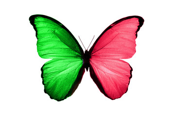 tropical green red butterfly.