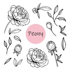 Set of peony flowers