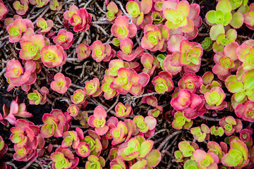 Texture of bright plants for background