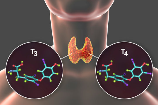 Molecules of thyroid hormones T3 and T4. Triiodothyronine and thyroxine, 3D illustration