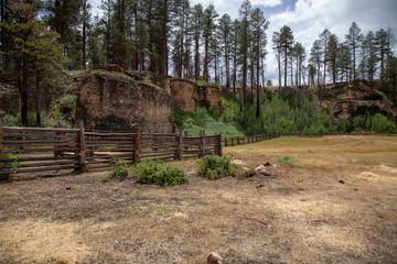 Billy Sink, Kiabab National Forest, Arizona