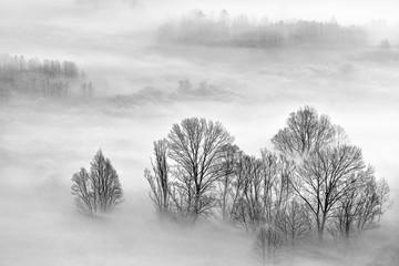 Paesaggio in bianco e nero sulla foresta con nebbia