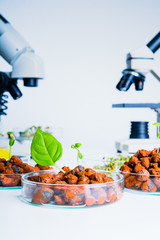 Modern Laboratory .Vegetables in hydroponics  tech picks.