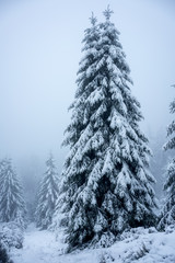 Christmas tree in a forest