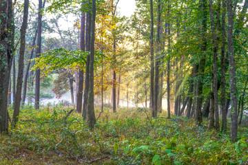 Wall Murals Forest Benezett PA