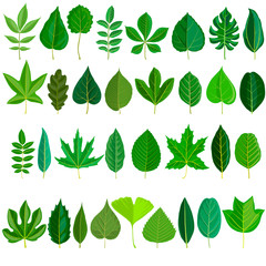 vector set of tree leaves