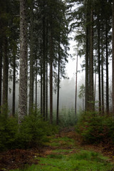 Winter rain walk in the Black Forest Germany