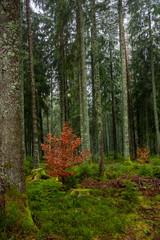 Winter rain walk in the Black Forest Germany