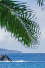 Island Palm Leaf