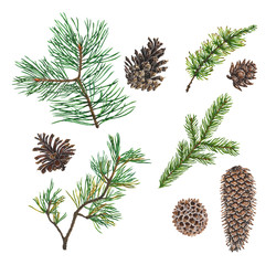 Christmas tree coniferous branch and cones art