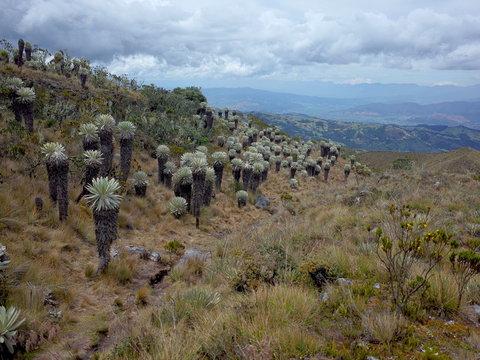The Paramo of Oceta near Mongui, Colombia