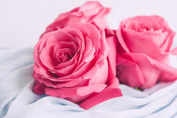 rose flower blossom - wedding, holiday and floral garden styled concept
