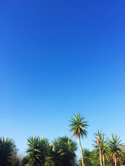 palm tree and blue sky - travel, exotic and tropical backgrounds styled concept