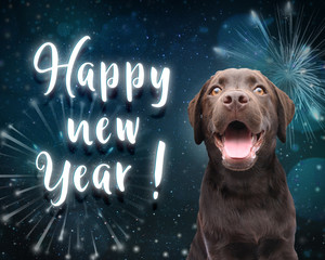 Dog wishes you a happy new year for 2019 with dark blue firework background