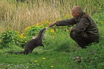 Animal care keeper Otter Lutra