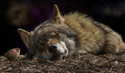 Wolf nature space fantasty