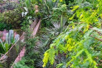 Suspension bridge in the jungle, beautiful travel destination