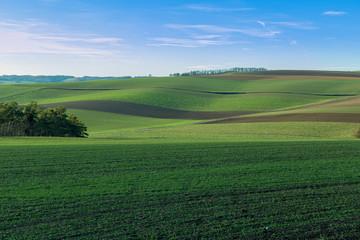 Grren farmland