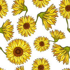 Seamless pattern of sunflower. Vector illustration of autumn flowers isolated on white background.