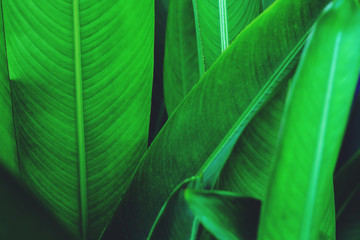 Bird of paradise, heliconia, leaf texture pattern background, spa background concept