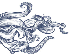 Tentacles of an octopus. Hand drawn vector illustration in engraving technique isolated on white background.