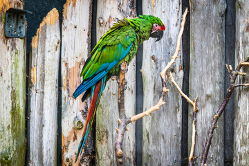 Parrot in green color looking sad
