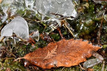 凍った枯れ葉