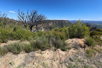 Blue Mountains - Australien III