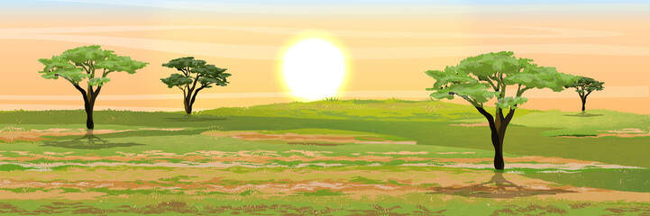 African savannah. Grass, acacia trees. Realistic vector landscape. The nature of Africa. Reserves and national parks. Wall mural