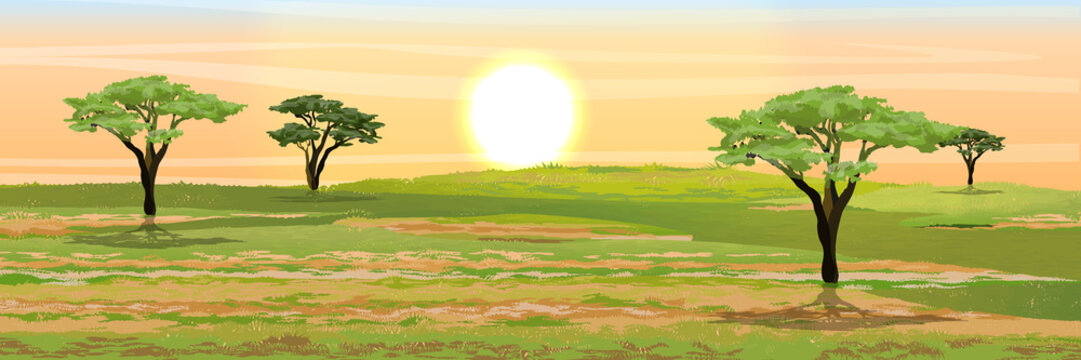 African savannah. Grass, acacia trees. Realistic vector landscape. The nature of Africa. Reserves and national parks.