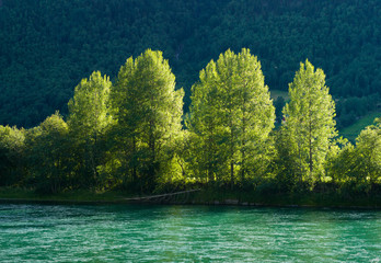 Trees along the river. Otta, Norway.