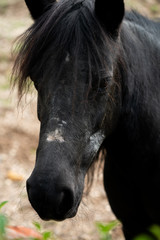 black young horse