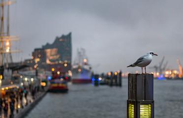 an den Landungsbrücken, Möwe an der Elbe in Hamburg