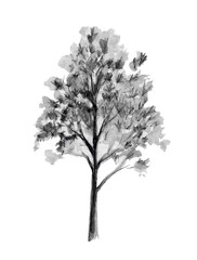 Hand drawn sketch. Tree vector illustration. Back element isolated on white background. Freehand drawing.