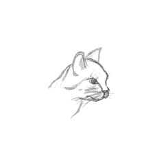 Cat head isolated on white background. Hand drawn illustration. Drawing of animal. Profile Portrait of Young Domestic Cute pet. Pencil sketch graphics.