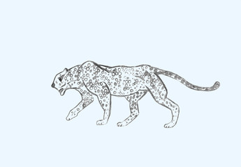 Cheetah prowling. Black line drawing Isolated on light gray background. Hand drawn illustration. Pencil sketch. Profile of African predator. Walking animal.