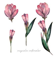 Watercolor magnolia flowers set