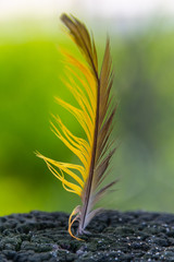 Yellow and Brown Feather in a post