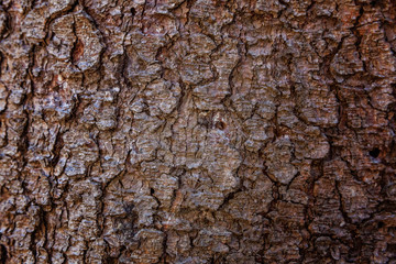 Pine bark close up. Simple eco rustic live wooden background. Texture of tree trunk. Live wood skin nature of forest. Copy space, mock up