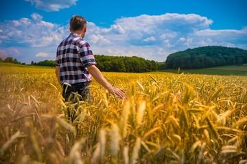 Obraz Rolnik w łanie zboża - fototapety do salonu