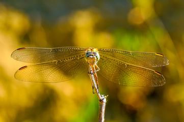 Beautiful nature scene dragonfly