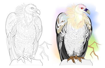 Colorful and black and white page for coloring book. Hand-drawn illustration of funny vulture sitting on a rock. Worksheet for children and adults. Vector cartoon image.