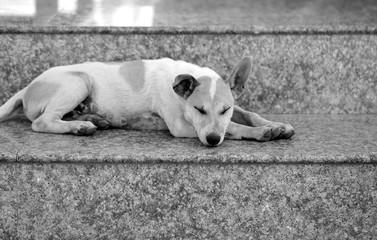 macro photo of a little puppy street