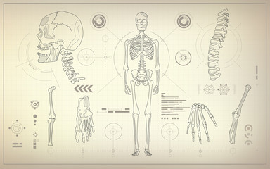 concept of health care technology, parts of skeleton in anatomical science
