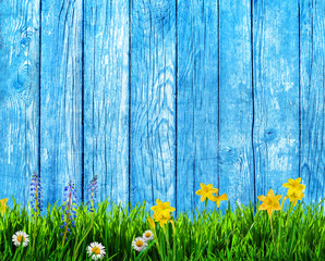 spring background with flowers and wooden pickets