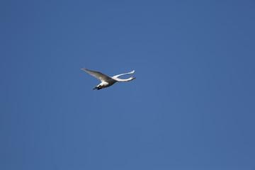 fotografias de aves varias