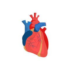 Human heart illustration. Red, blood, organ. Medicine concept. Vector illustration can be used for hospital, laboratory, medical colleges and universities, anatomy studying