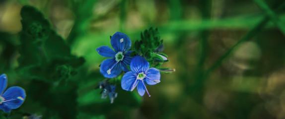 FOREST GARDEN - Blue flowers in the sunshine